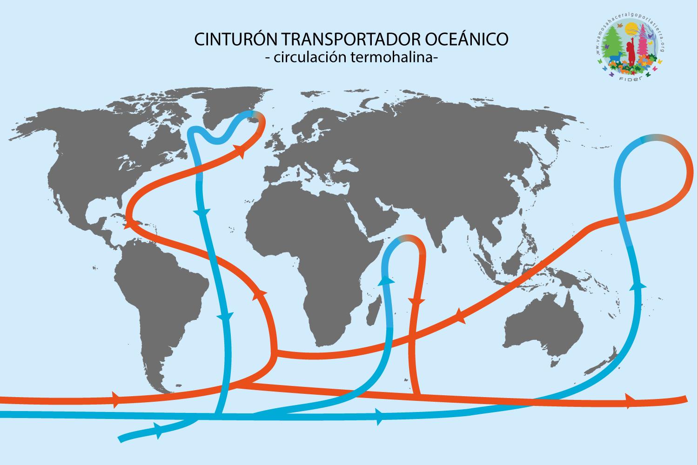 Cinturón transportador oceánico - Circulación termohalina